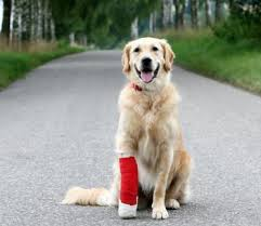 dog injury