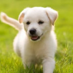 Pet Care Insurance - Choosing the Best Pet Insurance