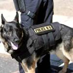Police Dogs  – Specialized Training of a Different Type