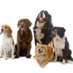 Flint River Ranch Dog Food Review