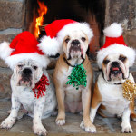 Pets and Holidays – Holiday Pet Care