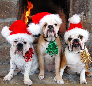 Holiday Pet Care