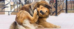 senior dog skin problems