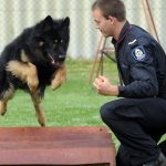 Dog Behavior – Guard Against Dog Attacks