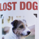 Taking in a Lost Dog