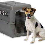 Transport Dog Crates – Travel by Airplane