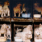 Puppy Mills on Oprah – What You Can Do To Stop Puppy Mills