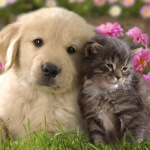 Bonds Between Cats and Dogs
