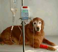 Kidney Failure in Dogs