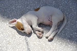 Dog Worms Symptoms
