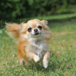 The Doggie Door – Funny Dog Story