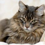 Cat Urine Odor Removal And The Best Products To Do It