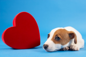 Dog Heart Murmur Symptoms