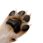 Looking After Your Dog's Paws