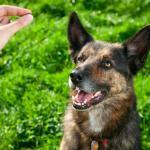 Your Dog – Teamwork and Heirachy
