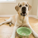 Dog Food- Natural Food Is Healthier