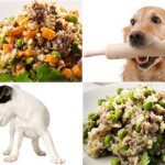 Why Is Natural Dog Food Better For You Pet
