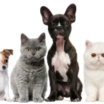 Pet Food To Maximize A Dog's Health