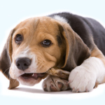 Dog Treats: Your Dog's Second Best Friend