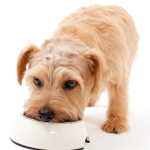 Pet Food: Healthy Dog Food