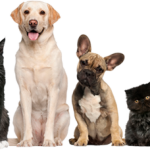 Dog Food - What Is Best For Your Pet?
