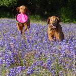 Dog Information To Make Dog Food And Snacks