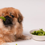Dog Food What The Consumer Should Know