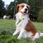 Dog Information: The Nutrition Your Dog Needs