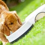 Dog Information - Introduction Of Premium Dog Food