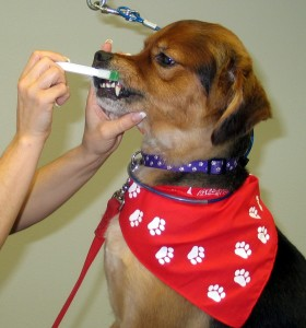 dog oral tumor
