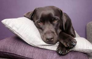natural anxiety treatments for dogs