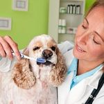 Dog Teeth, Dog Teeth Cleaning, and Dog Dental Care