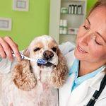 Dog Teeth, Dog Teeth Cleaning, and Dog Dental Care