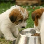 Pet Food Prepared At Home, Easy And Healthy