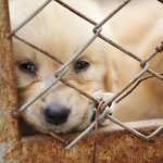 Puppy Mills Are So Cruel