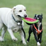 Natural Dog Food Can Be Organic