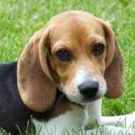 Dog Food: Maintaining A Happy And Healthy Pet