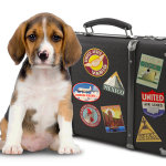 Pet Vacations – Travel With Your Dog