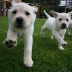 Simplified Puppy Training Tips Uncovered