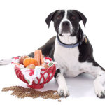 Dog Treats Can Have Ingredients Harmful to Your Dog