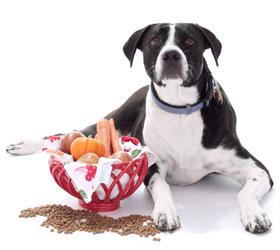 Dog food and dog treats