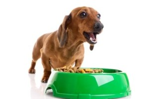 Dog Food Information