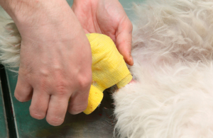 Treatment for Dog Joint Pain