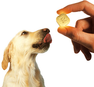NSAIDS for dogs
