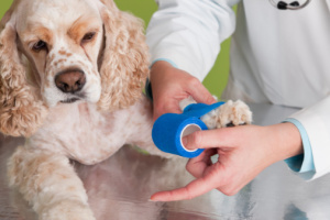 treat dog joint pain