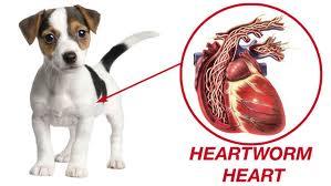 heartworm natural prevention tips