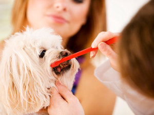 Successfully Brushing your Dog