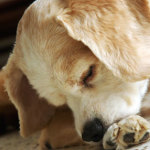 How to Deal with Dog Skin Allergies Effectively