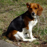 Dealing With Canine Arthritis