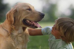 dog's bad breath